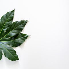 A square photo of a fragment of a green leaf on a white background
