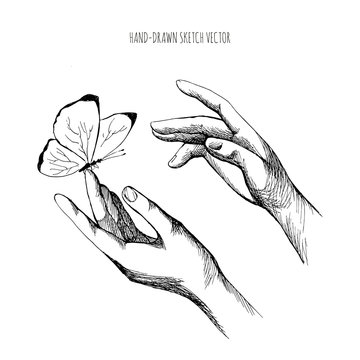 Drawing Hands releasing butterfly. Let go, brush the hand of man, Fly, Freedom. Hand drawn sketch vector
