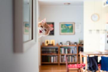 Funny pussycat peeking around the corner and hissing.