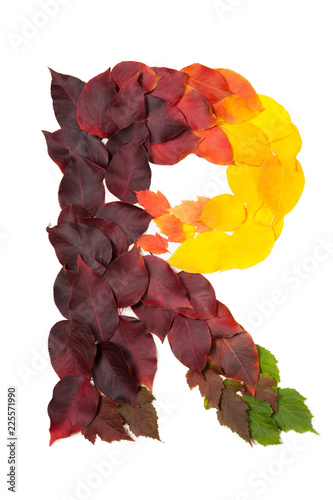 Letter R Of Colorful Autumn Leaves Character R Mades Of Fall