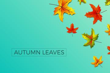 Herbstblätter Hintergrund blau