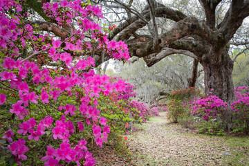 Deurstickers Azalea Magnolia Plantation & Gardens. Charleston, South Carolina, USA