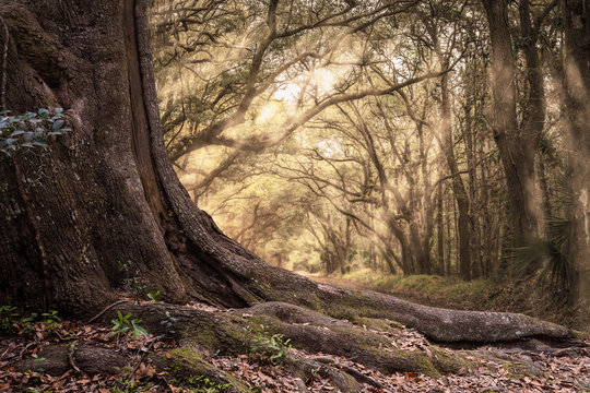 Old big trunk of a tree with background of forest and sunbeam