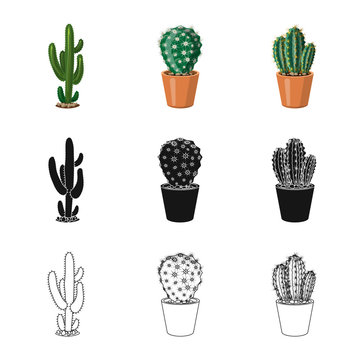 Vector illustration of cactus and pot sign. Collection of cactus and cacti stock symbol for web.