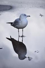 seagull on the beach