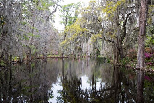 Still water and reflection in Magnolia Plantation & Gardens. Charleston, South Carolina, USA