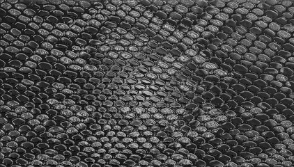 Wall Mural - Snake skin texture background