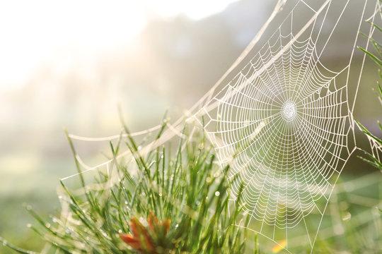 Cobweb on wild meadow, closeup view