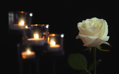 Burning candles and rose flower on dark background. Funeral symbol