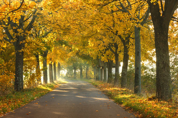 Canvas Prints Autumn Misty morning sunrise./ Beautiful Autumn forest with country road landscape in north Poland