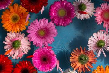 Las flores de colores están en el agua para decorar el ambiente.