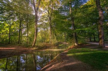 Der Herbst mit seinen bunten Blättern ist angekommen, ein Waldstück mit einem Fluss und die Äste durchdringende Sonnenstrahlen zeigen die Schönheit dieser Jahreszeit