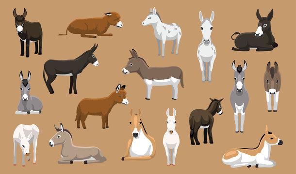 Various Donkey Breeds Cartoon Vector Characters