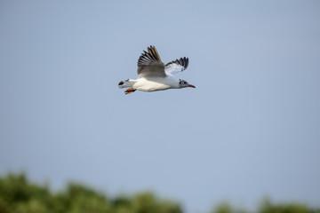 flying seagull at bangpu recreation center samut prakan thailand