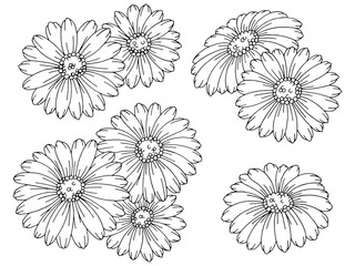 Chamomile flower graphic black white isolated sketch set illustration vector