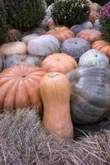 Decorative background of pumpkins