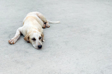 Young light-haired mongrel sleeps on asphalt, copy space