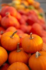 Aluminium Prints Autumn A lot of fresh and organic Hokkaido pumpkins on farmers market