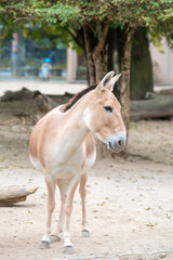 donkey in zoo, facing down, looking around