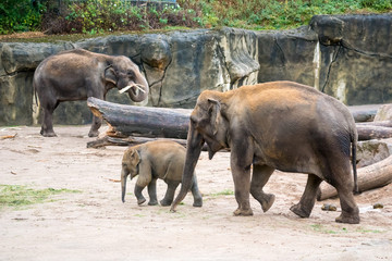 elephant and baby elephant in zoo