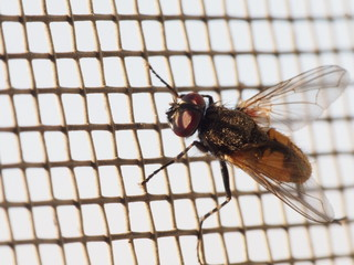 fly on mosquito net macro