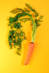 Pile of homegrown organic young carrot with water drops on yellow surface