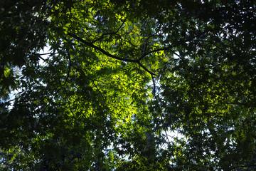 """under the japanese marple """"momiji"""" trees foliage"""