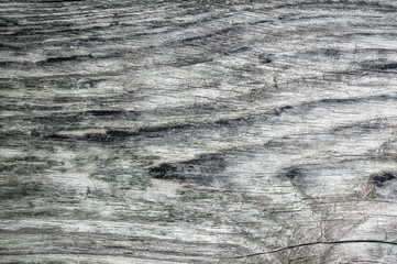 The surface is blurred by time, old wooden background. Wood texture with natural pattern left by water on the tree
