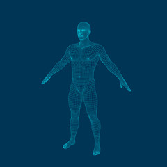 Standing man. Wireframe human body. Vector outline illustration