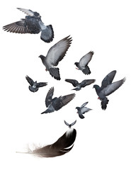 seven black doves flying from large dark feather