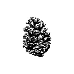 Pine cone, hand drawn illustration. Vector design for Christmas, officinal logotype, organic products symbol.