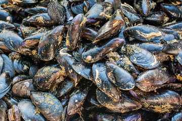 Mussels/Moules on public market