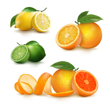 Fresh citrus fruits whole and halves. vector illustration