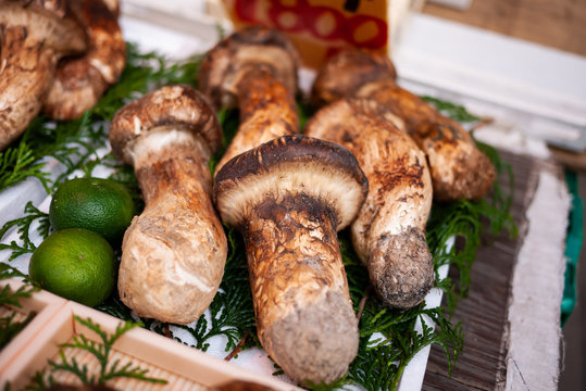 Matsutake Mushroom is a highly sought mycorrhizal mushroom. Much love by Asian, especially Japanese. Highly regards and prized as Truffle of the east for its distinct aromatic odor. Symbol of Autumn.