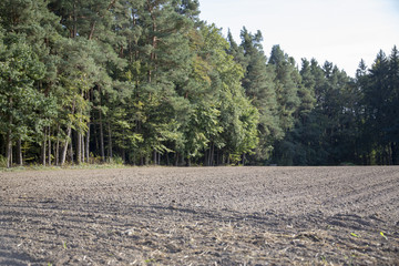 Fotoväggar - Feld