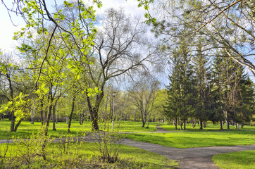 Beautiful spring landscape in city park with bright young greenery at warm sunny day with blue sky and white clouds. Beauty of awakening nature