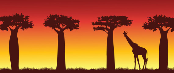 Silhouette of giraffe and baobabs. Africa.