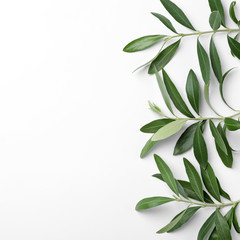 Twigs with fresh green olive leaves and space for text on white background, top view