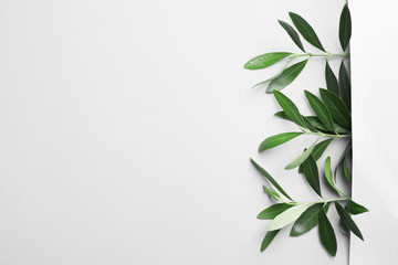 Twigs with fresh green olive leaves on light background, top view. Space for text
