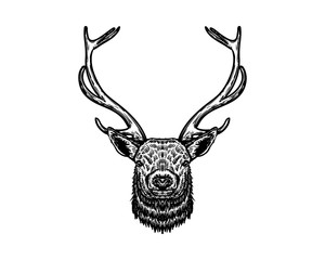 Hand Drawn of Deer Head with Horn Sign Symbol Vintage Logo Vector