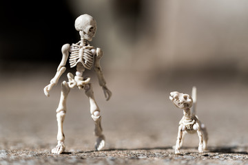 Skeleton walking his dog
