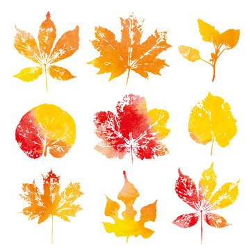 Autumn watercolor leaves imprints isolated on white background vector