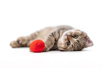 Fototapeta Playing Kitten 1