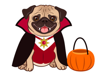 Halloween pug dog in vampire costume cartoon illustration. Cute friendly fat chubby fawn sitting pug puppy, smiling with tongue out. Pets, dog lovers, animal themed design element isolated on white.