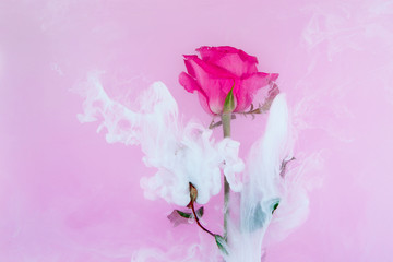 water color style abstract red rose white background acrylic inside water passion blood pink leaves green around