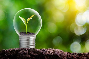 The bulb is located on the inside with leaves forest and the trees are in the light. Concepts of environmental conservation and global warming plant growing inside lamp bulb over dry Wall mural