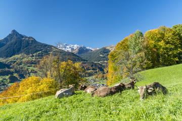 Kühe im Herbst in den Alpen