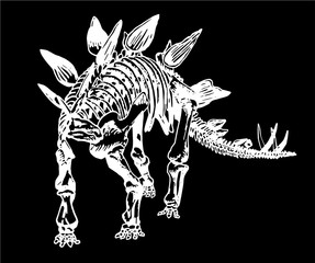 Graphical sketch of stegosaurus skeleton isolated on black background,vector tattoo illustration