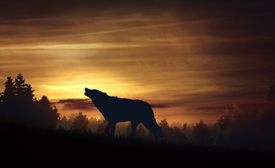 Wolf howling in the woods at twilight