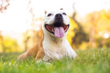 Autumn portrait of cute terrier dog